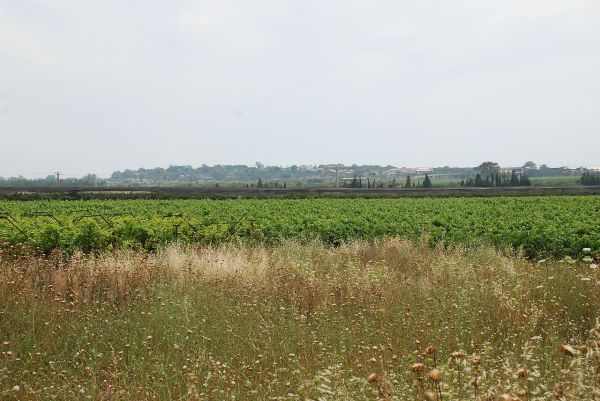 Fallow field in Israel
